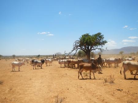 Dry season watering